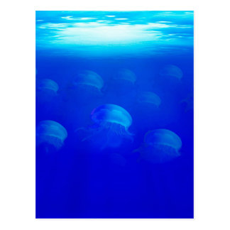 Group blue jellyfish in the Atlantic ocean swiming Postcard