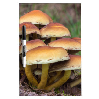 Group brown mushrooms in fall forest dry erase board