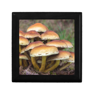Group brown mushrooms in fall forest gift boxes