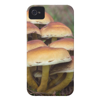 Group brown mushrooms in fall forest iPhone 4 cover