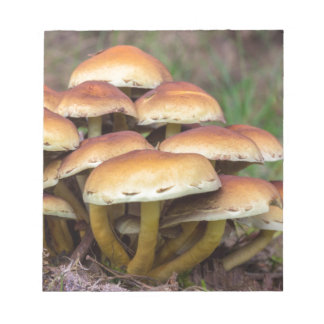 Group brown mushrooms in fall forest notepad