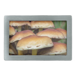 Group brown mushrooms in fall forest rectangular belt buckle