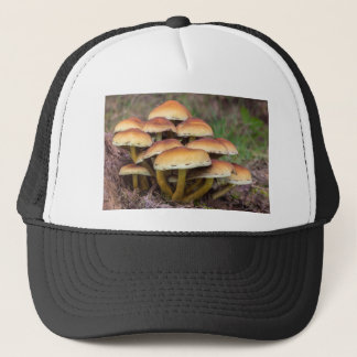 Group brown mushrooms in fall forest trucker hat