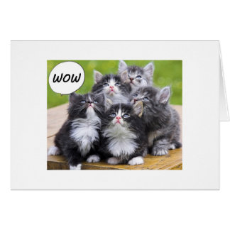 GROUP CARD-FOR THE 50 YEAR OLD KITTY LOVER GREETING CARD