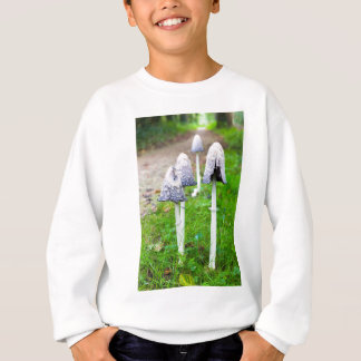 Group ink mushrooms near forest path in fall sweatshirt
