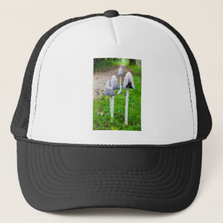 Group ink mushrooms near forest path in fall trucker hat