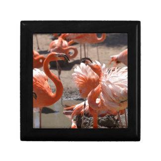 Group of Cuba flamingos Gift Box