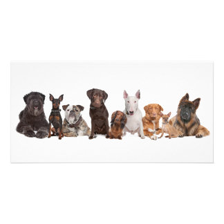 Group of Dogs Photo Greeting Card