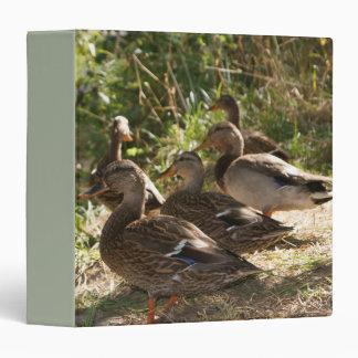 Group Of Ducks, 3 Ring Binder