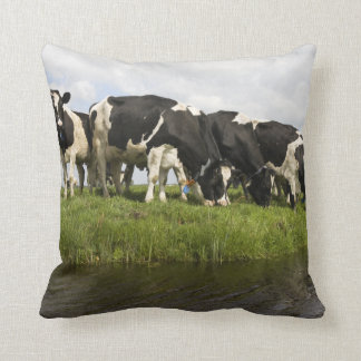 Group of Friesian cows Throw Pillow