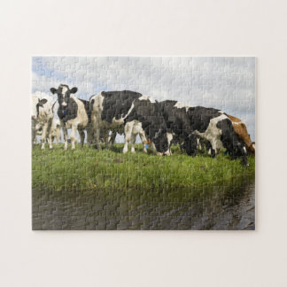 Group of Friesian cows Puzzle