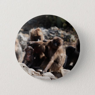 Group of gelada baboons (Theropithecus gelada) 2 Inch Round Button