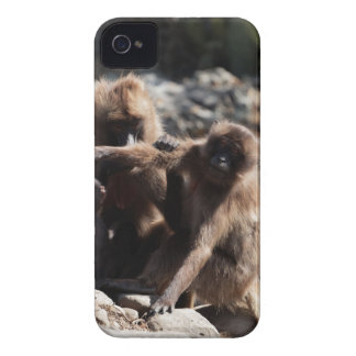 Group of gelada baboons (Theropithecus gelada) Case-Mate iPhone 4 Cases