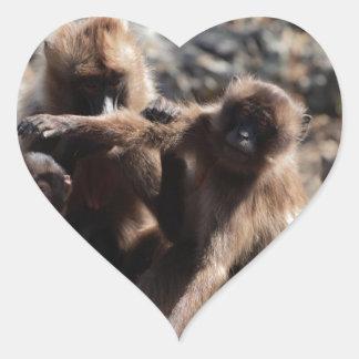 Group of gelada baboons (Theropithecus gelada) Heart Sticker