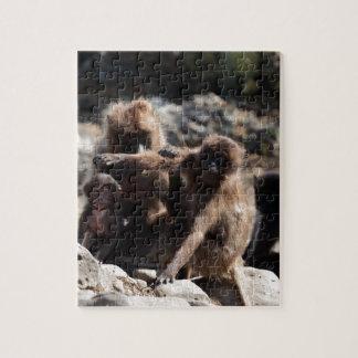 Group of gelada baboons (Theropithecus gelada) Jigsaw Puzzle
