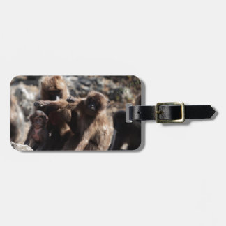 Group of gelada baboons (Theropithecus gelada) Luggage Tag