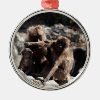 Group of gelada baboons (Theropithecus gelada) Metal Ornament