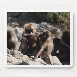 Group of gelada baboons (Theropithecus gelada) Mouse Pad