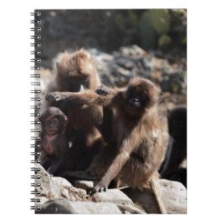 Group of gelada baboons (Theropithecus gelada) Notebook