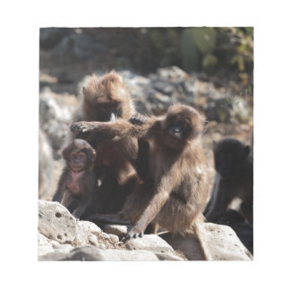 Group of gelada baboons (Theropithecus gelada) Notepad