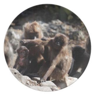 Group of gelada baboons (Theropithecus gelada) Plate