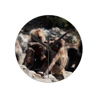 Group of gelada baboons (Theropithecus gelada) Round Clock