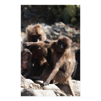Group of gelada baboons (Theropithecus gelada) Stationery