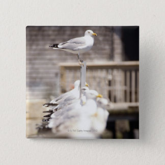 group of Herring Gulls (Larus argentatus) on a 2 Inch Square Button