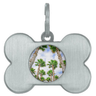 Group of high straight palm trees pet name tag