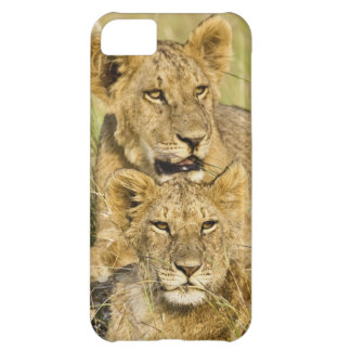 Group of lion cubs, Panthera leo, Masai Mara, Cover For iPhone 5C