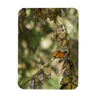 Group of Monarch Butterfies, Mexico Rectangular Photo Magnet