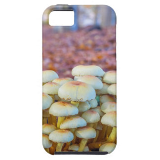 Group of mushrooms in fall beech forest case for the iPhone 5