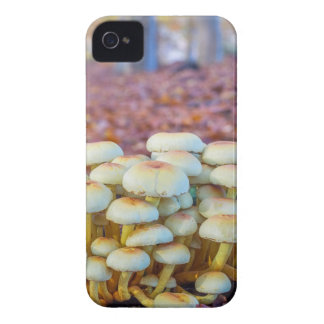Group of mushrooms in fall beech forest Case-Mate iPhone 4 cases
