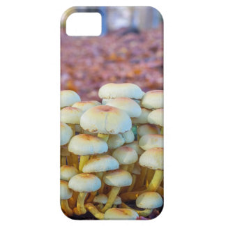 Group of mushrooms in fall beech forest iPhone 5 case