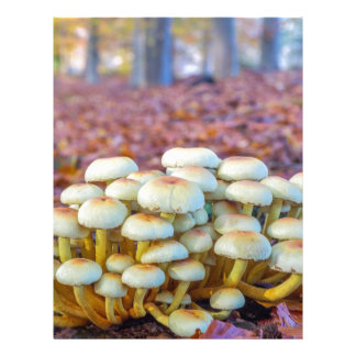 Group of mushrooms in fall beech forest letterhead