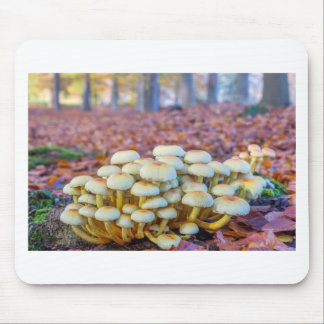 Group of mushrooms in fall beech forest mouse pad
