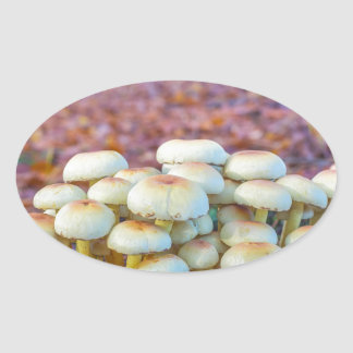 Group of mushrooms in fall beech forest oval sticker