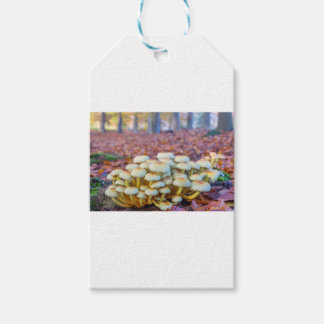 Group of mushrooms in fall beech forest pack of gift tags