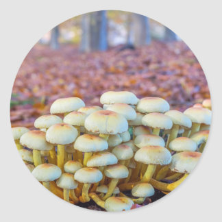 Group of mushrooms in fall beech forest round sticker