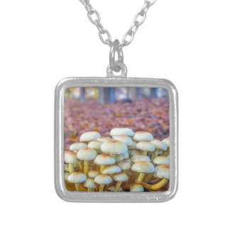 Group of mushrooms in fall beech forest silver plated necklace