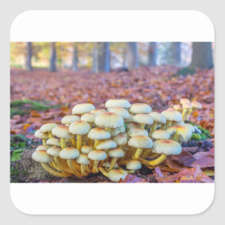 Group of mushrooms in fall beech forest square sticker