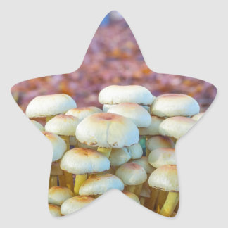 Group of mushrooms in fall beech forest star sticker