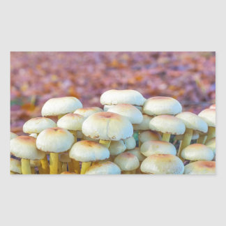 Group of mushrooms in fall beech forest sticker
