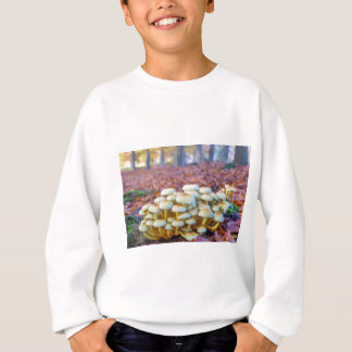 Group of mushrooms in fall beech forest sweatshirt