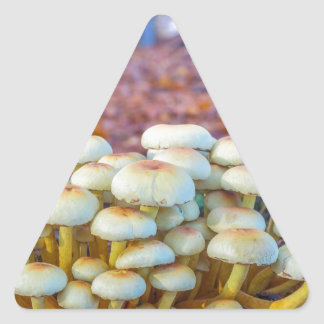 Group of mushrooms in fall beech forest triangle sticker