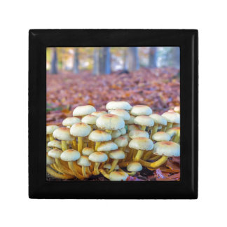 Group of mushrooms in fall beech forest trinket boxes