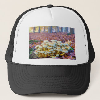 Group of mushrooms in fall beech forest trucker hat