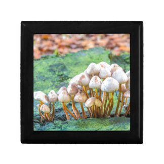 Group of mushrooms on green tree stump gift boxes