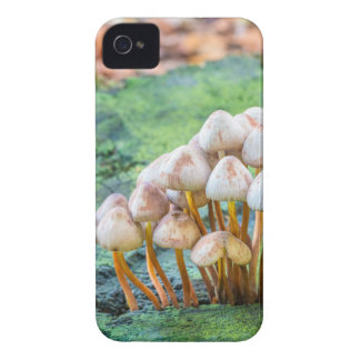 Group of mushrooms on green tree stump iPhone 4 Case-Mate cases