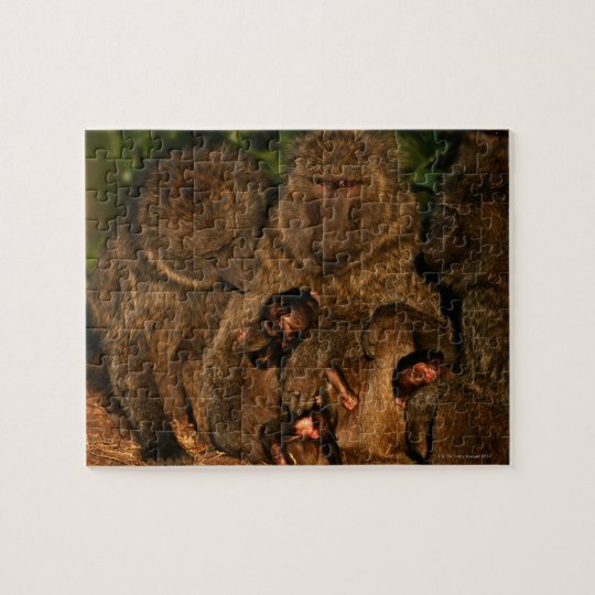 Group of olive baboons (Papio anubis) watching, Jigsaw Puzzle